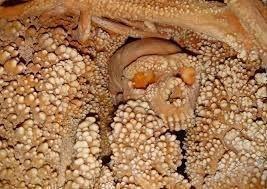 """Uomo di Altamura, """"La grotta di Lamalunga va tutelata nella sua interezza"""""""