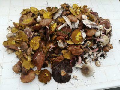 Portoselvaggio tra le mete predilette dai cercatori di funghi