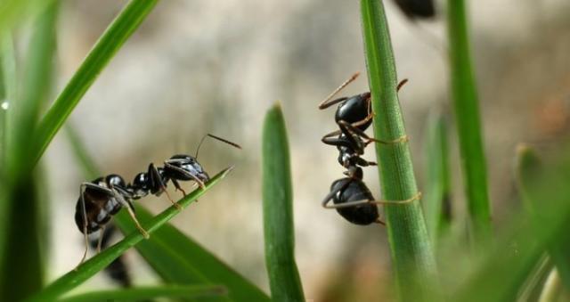 L'importanza delle piante per le formiche
