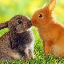 Coniglietti, persone e la dolce morte