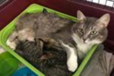 Storia di Geremia gattino disabile e dell'inseparabile mamma