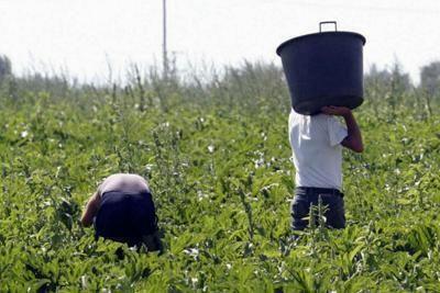 Lotta al caporalato e Politica Agricola Comune (PAC)