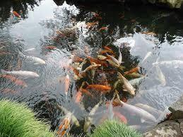 Bimbo di 2 anni cade e annega nello stagno del giardino di casa