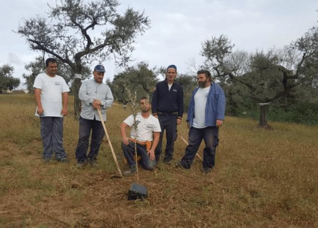 """""""Hopeificio"""", sui terreni del Comune di Chieuti sorgerà il nuovo frantoio"""