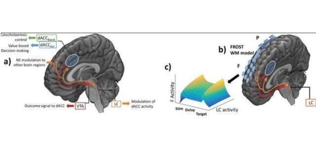 L'intelligenza artificiale made in Italy per comprendere l'Alzheimer