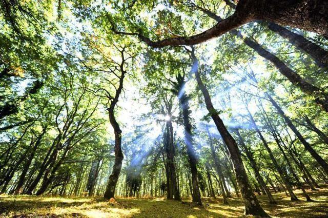 Turismo delle radici / Puglia, alla scoperta delle faggete della Foresta Umbra