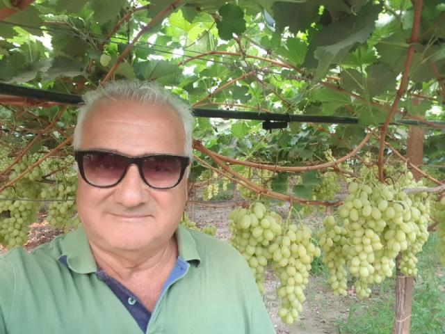 """Lonigro """"Uva da vino sotto attacco, Bellanova intervenga con contributo straordinario"""""""
