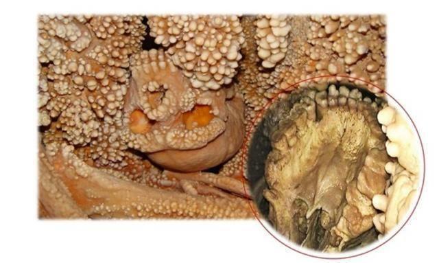 I denti dell'Uomo di Altamura svelano la vita dei Neanderthal