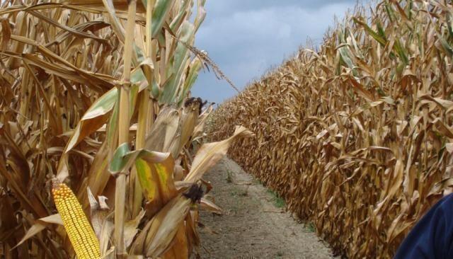 Manca l'Autorità italiana per la Sicurezza Alimentare