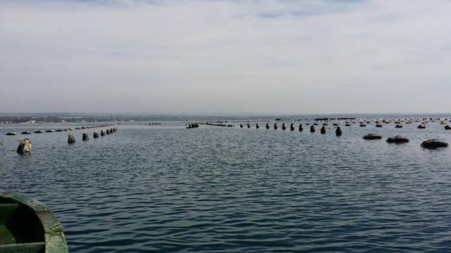 Taranto. Mitilicoltura sostenibile: al via la sperimentazione