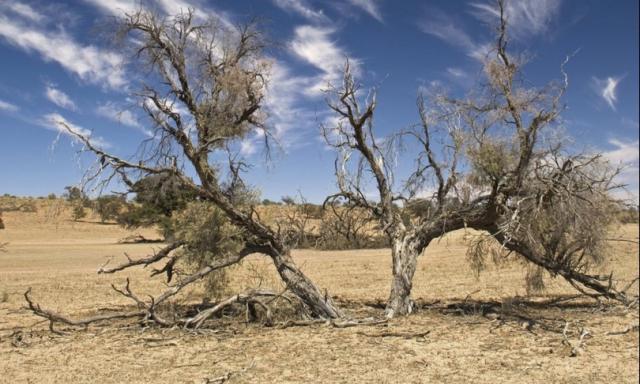 La Terra è sull'orlo di un drammatico cambiamento climatico?