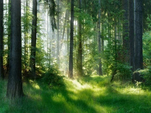 La prima piattaforma innovativa dedicata alla tutela dei boschi