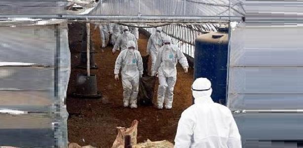 Russia virus influenza aviaria, per la prima volta persone infettate