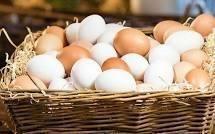 Candelo, il paese con il distributore automatico di uova fresche