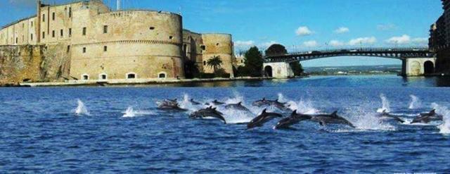 """Taranto, i delfini del golfo diventano un caso internazionale: """"Serve l'area protetta"""""""