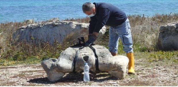 Puglia – I resti di una balenottera affiorano nella spiaggia dell'oasi le Cesine
