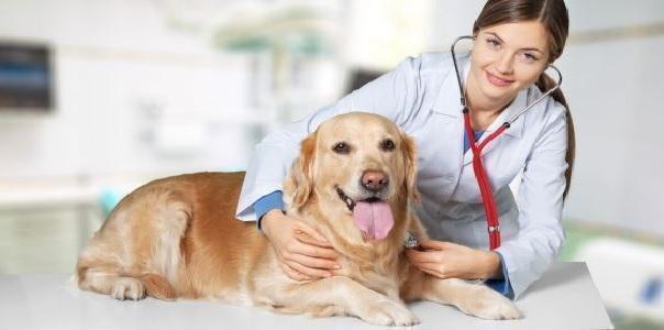 Per i nostri amici animali i medici sono più donne che uomini