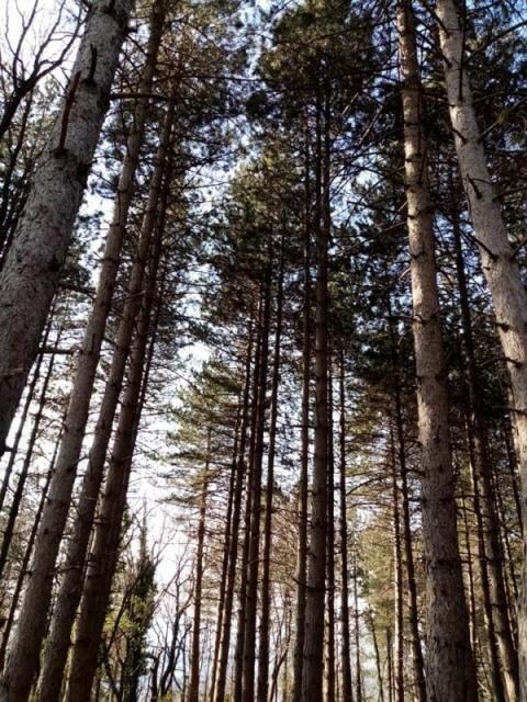 La pazienza dell'albero. Una riflessione eco-poetica
