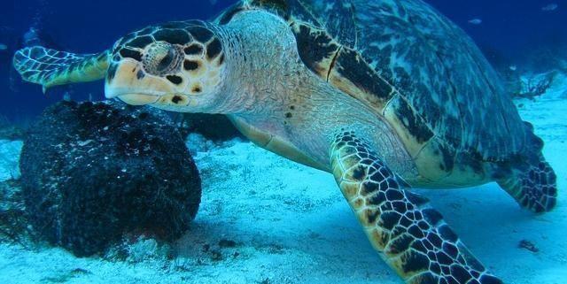 Madagascar: 19 persone, compresi 9 bambini, muoiono dopo aver mangiato tartarughe