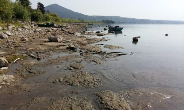 Le alghe che possono rilasciare tossine nell'aria