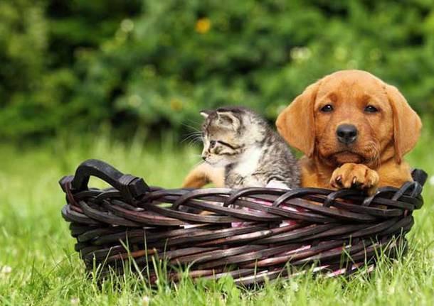 Animali a quattro zampe: Micio e Fido, amati e viziati, anche a tavola