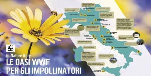 Primavera silenziosa: via in 30 anni il 70% della biomassa degli impollinatori