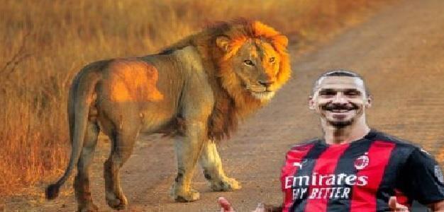Zlatan Ibrahimovic avrebbe ucciso un leone in Sud Africa nel 2011