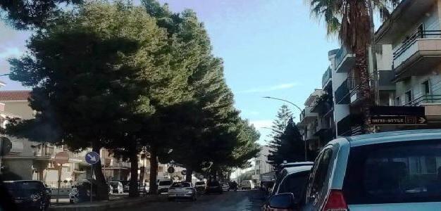 Palagiano (Taranto) – La tutela del verde urbano nella lettera aperta della Legambiente
