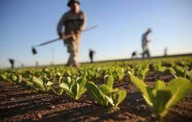 Potenza – Domani previsto sciopero dei  braccianti agricoli