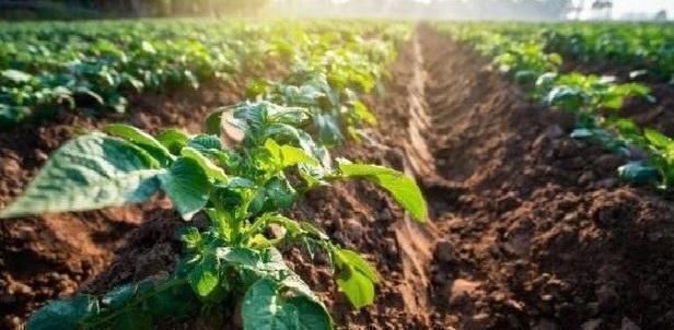 Progetto agricultura. Pon legalità Fesr Fse 2014 – 2020