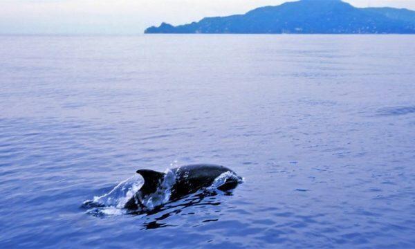 In Italia ci sono 31 santuari marini per la tutela della biodiversità