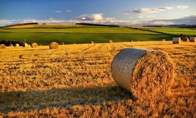 Puglia – L'agricoltura è il più grande datore di lavoro della regione