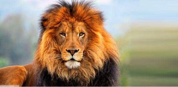 Sos leone: in 100 anni crollato il 90% della popolazione in Africa