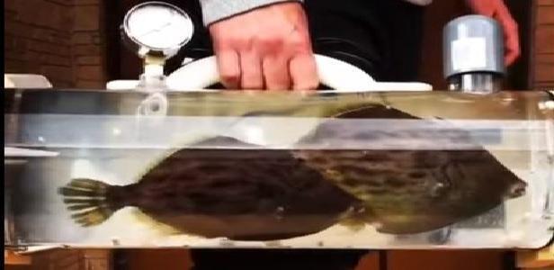 Portare a spasso il pesciolino