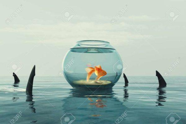 Squali e pesci rossi