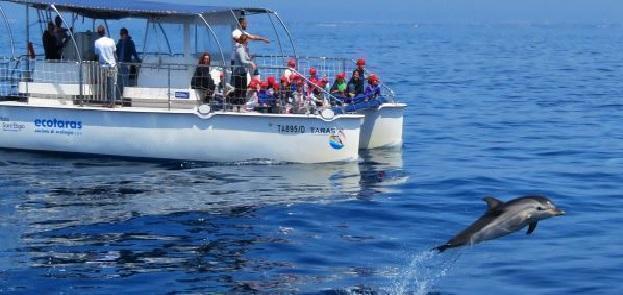 Jonian Dolphin