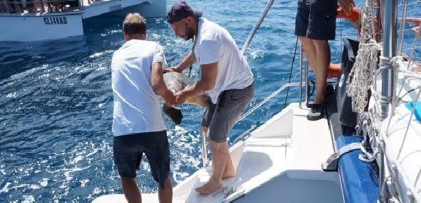 Tartarughe marine, wwf: Già 4 nidi monitorati fra Siciliae Calabria