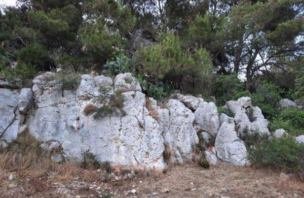 Grande partecipazione all'escursione su Murgia Sgolgore, oasi naturalistica privata del Dr. Lorenzo Giorgio