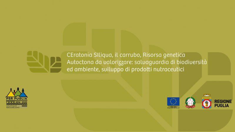 Nasce Ce.si.r.a., il progetto che valorizza il carrubo in Puglia