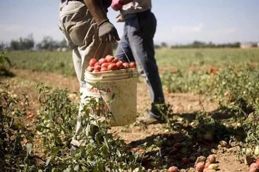 Lavoro nei campi: comunicato congiunto Cia, Confagricoltura e Copagri Puglia