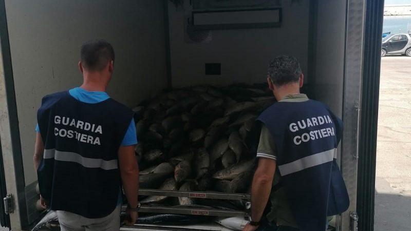 Controlli sulla filiera della pesca: la guardia costiera di molfetta sequestra 5.700 kg di prodotto ittico (alletterati)