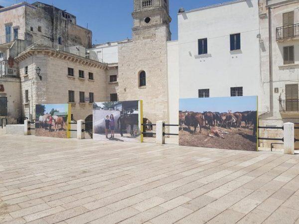 Inaugurata in occasione del G20 resterà aperta fino a fine agosto sul percorso della Muraglia a Bari Puglia Frames of Mind