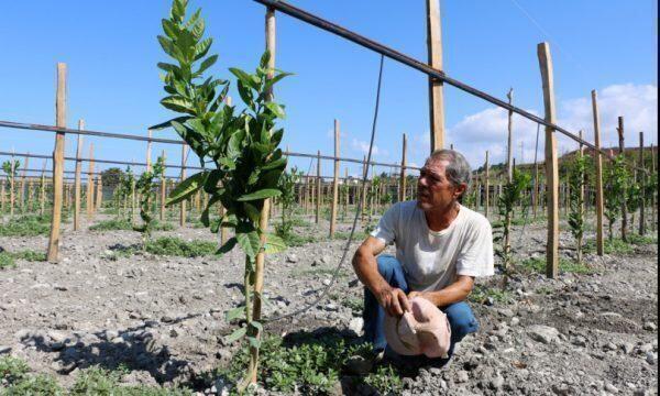Lavoro vietato nei campi in Calabria nelle ore più calde